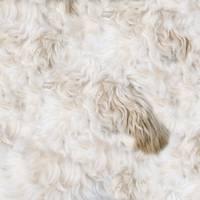 Beige Shaggy Fur