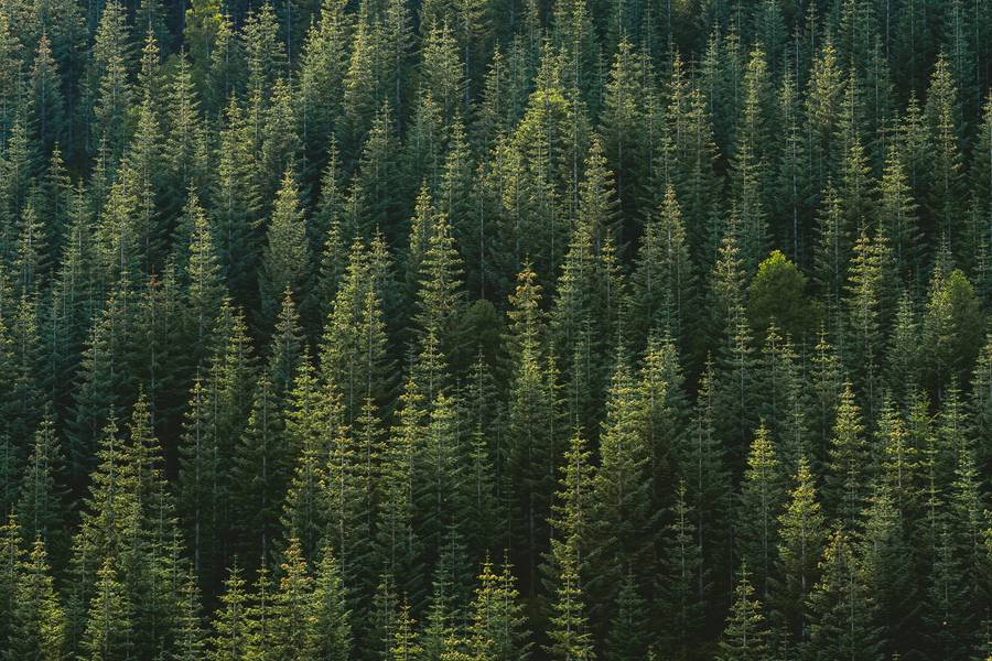 Aerial View of Forest free texture