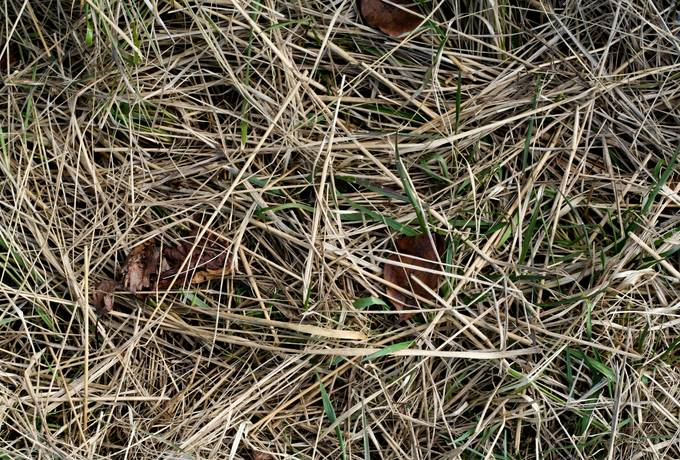 free nature hay ground texture