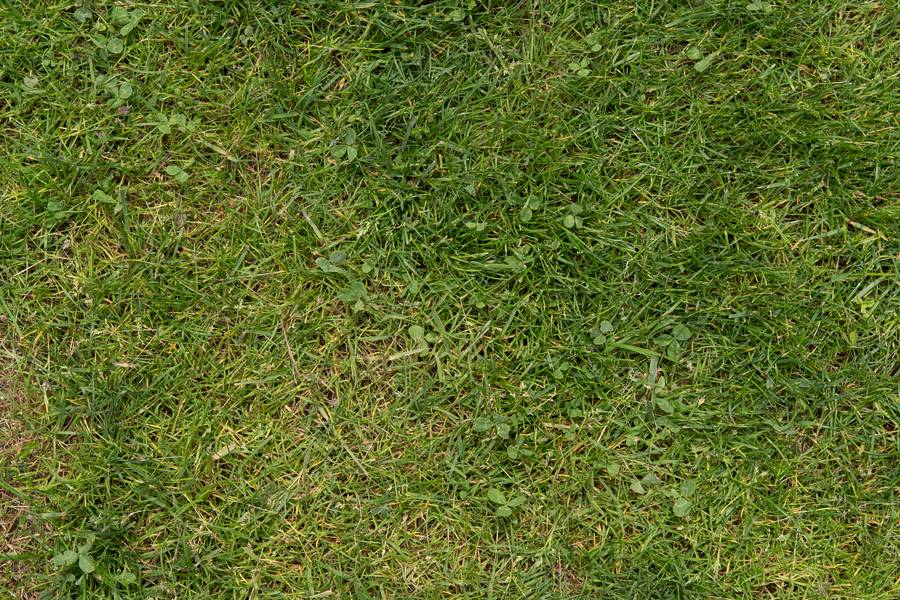 grass lawn green free texture