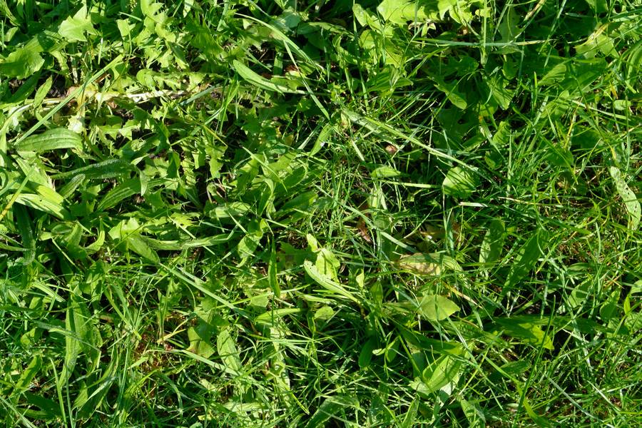 grass weed nature free texture
