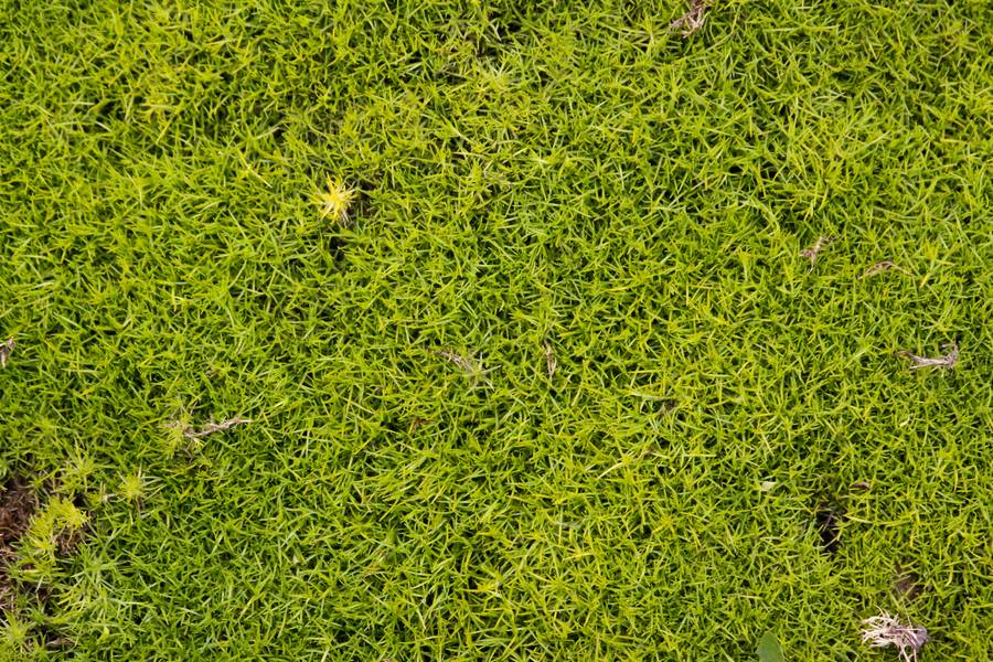 moss nature ground free texture
