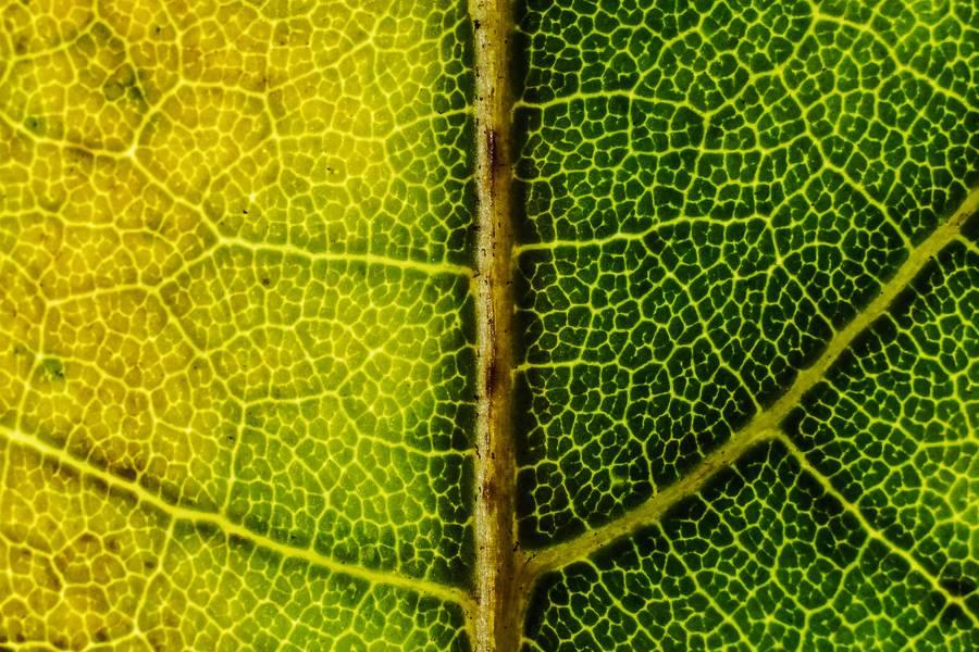 Green Leaf Macro free texture