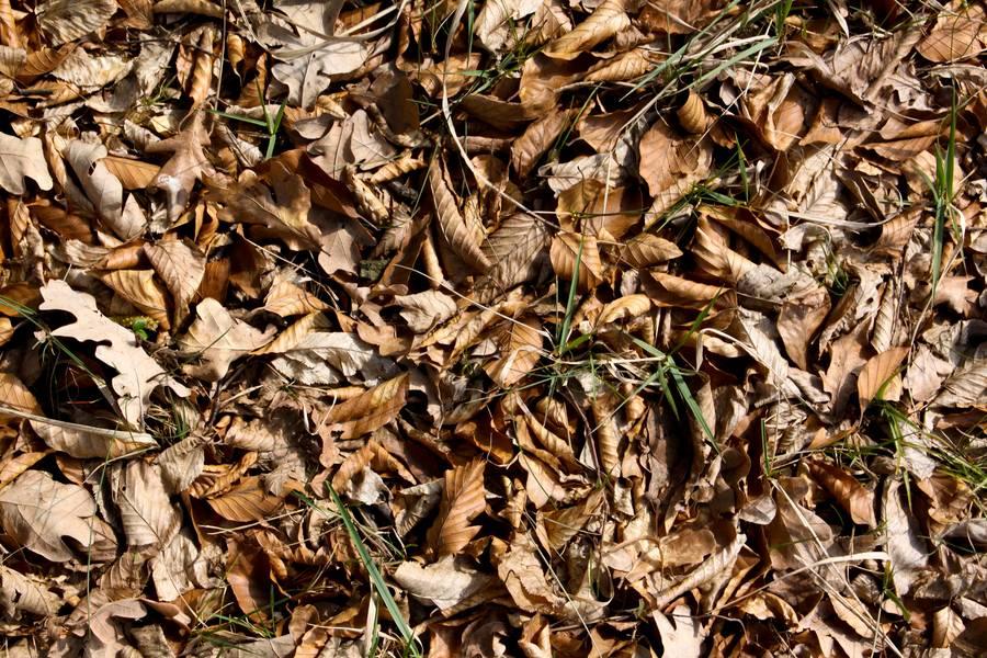tree litter autumn ground free texture