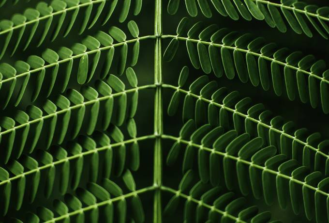 free Green Leaf Symmetry texture