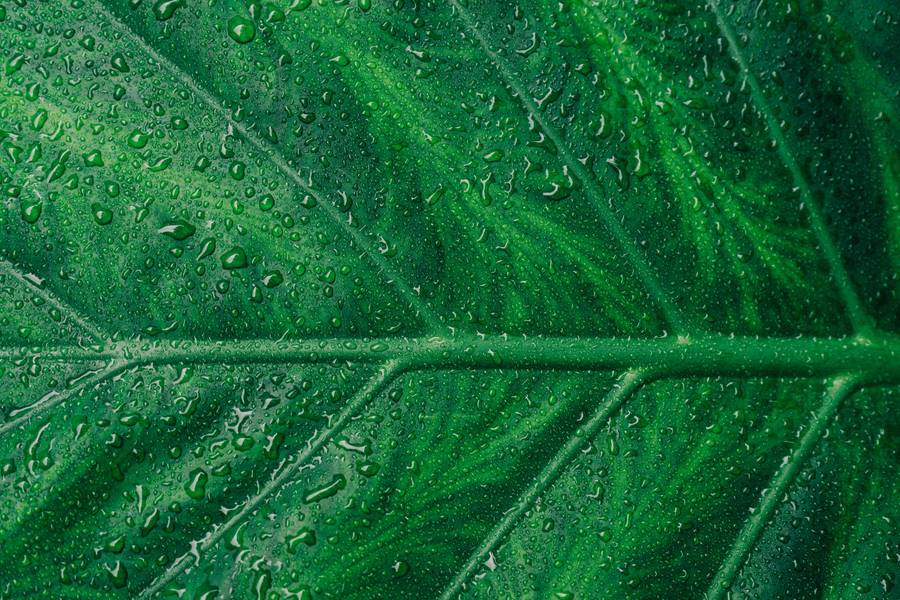 Green Wet Leaf Surface free texture