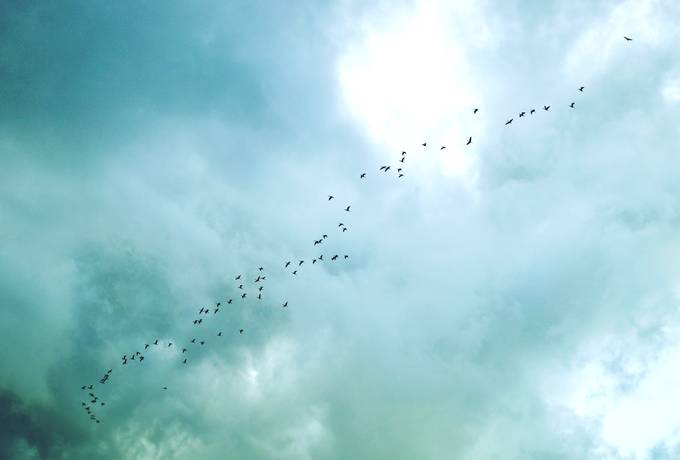 free Flock of Birds against the Sky texture