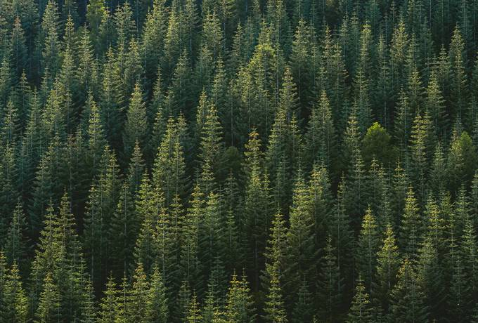 free Aerial View of Forest texture
