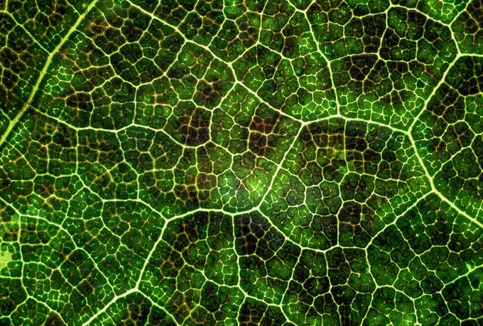 free Macro Photography of the Leaf texture