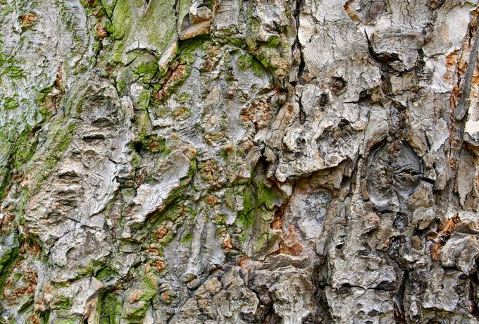 tree bark nature
