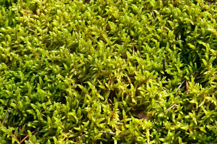 moss closeup nature free texture