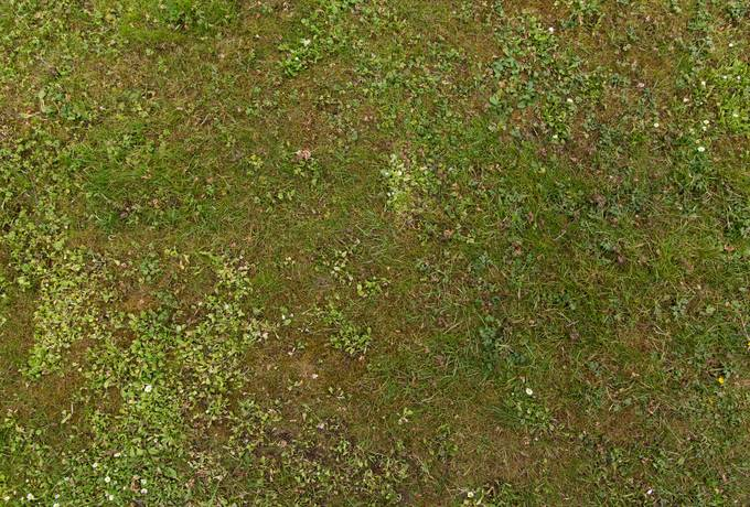 free grass ground green texture