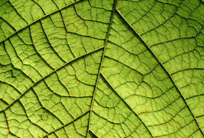 free Closeup of a Leaf texture