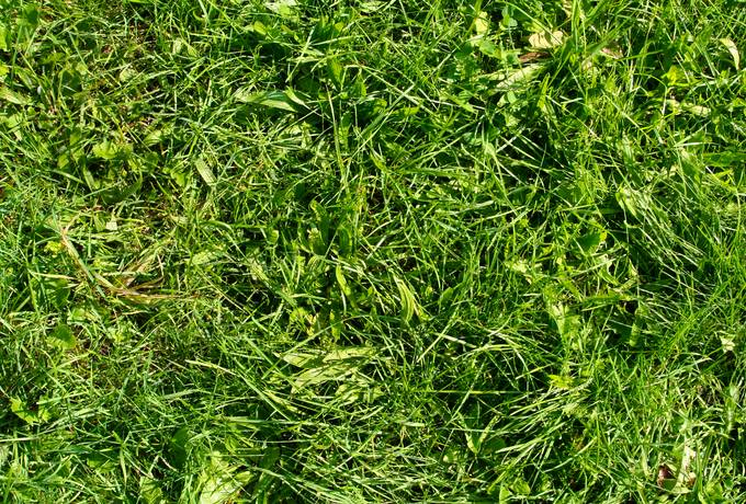free grass nature ground texture
