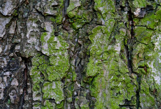 bark wood algae