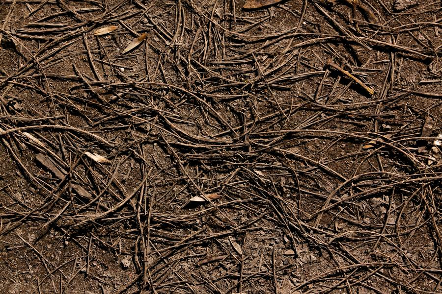 pine needles ground free texture