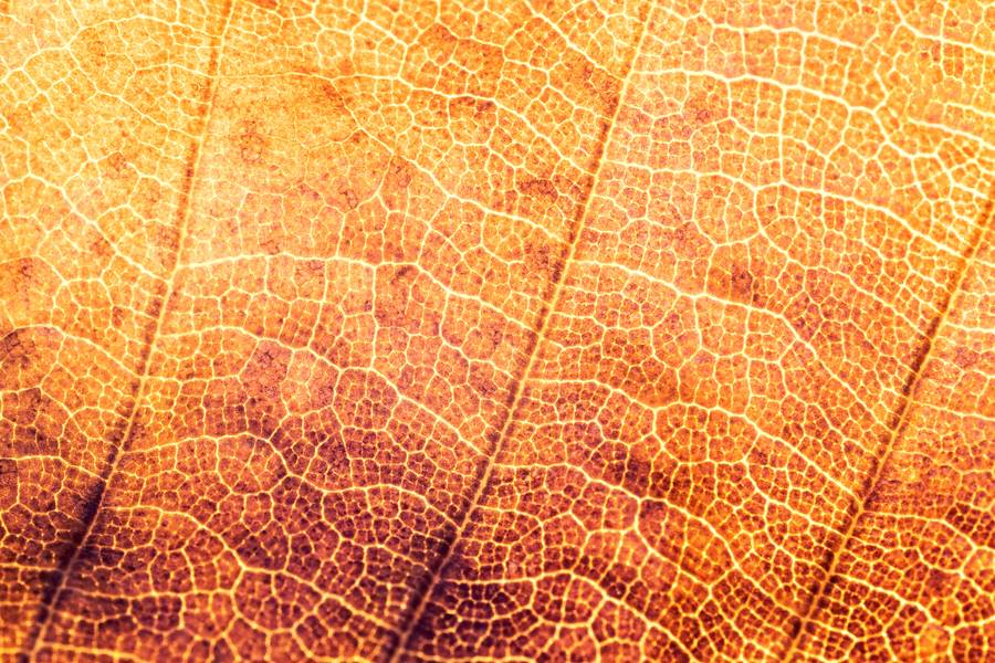 Orange Autumn Leaf Macro free texture