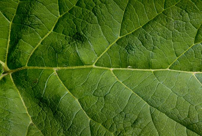 close-up nature leaf