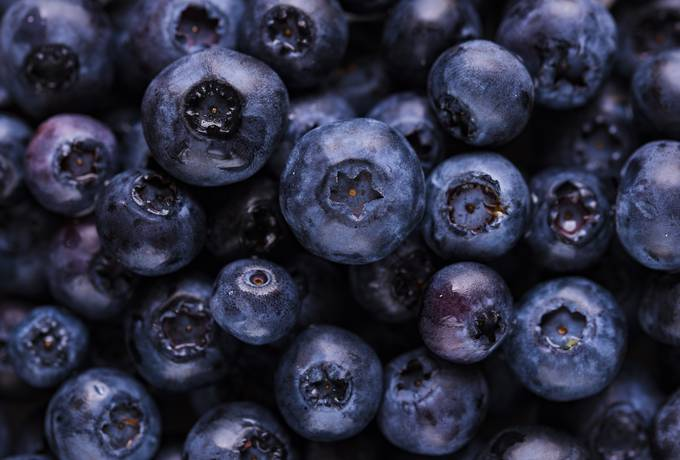 Fresh Blueberry Close Up