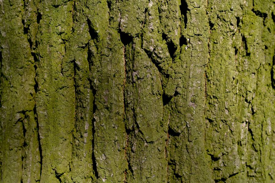 nature wood bark free texture