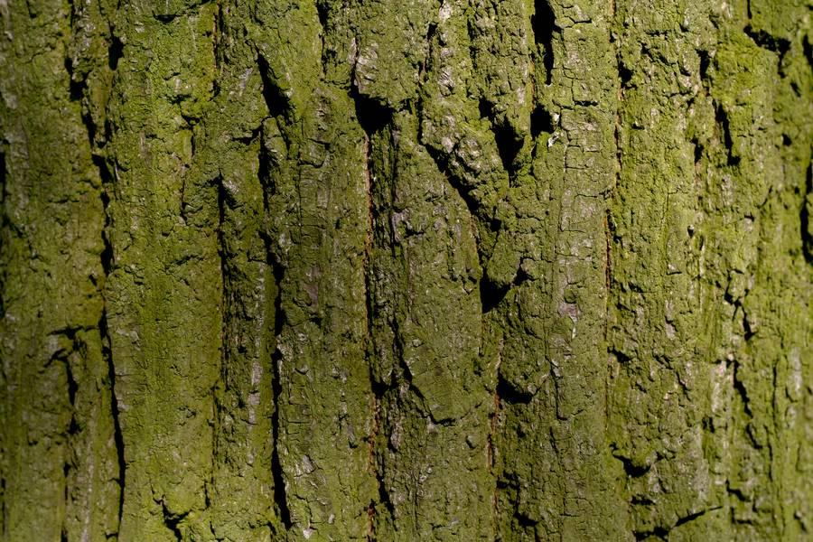 nature wood bark free texture