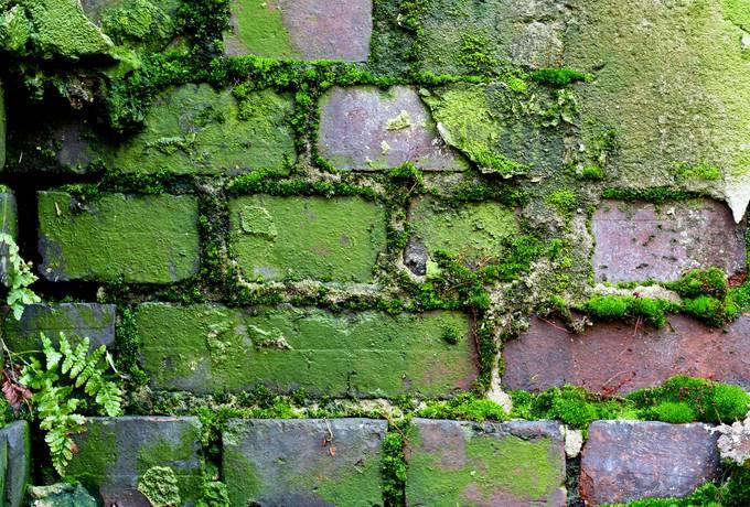wall moss brick