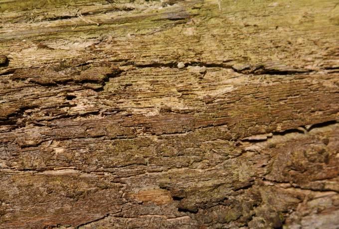 nature wood rotten