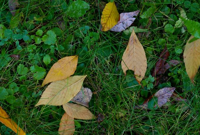ground autumn nature