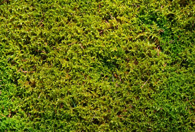 close-up moss nature