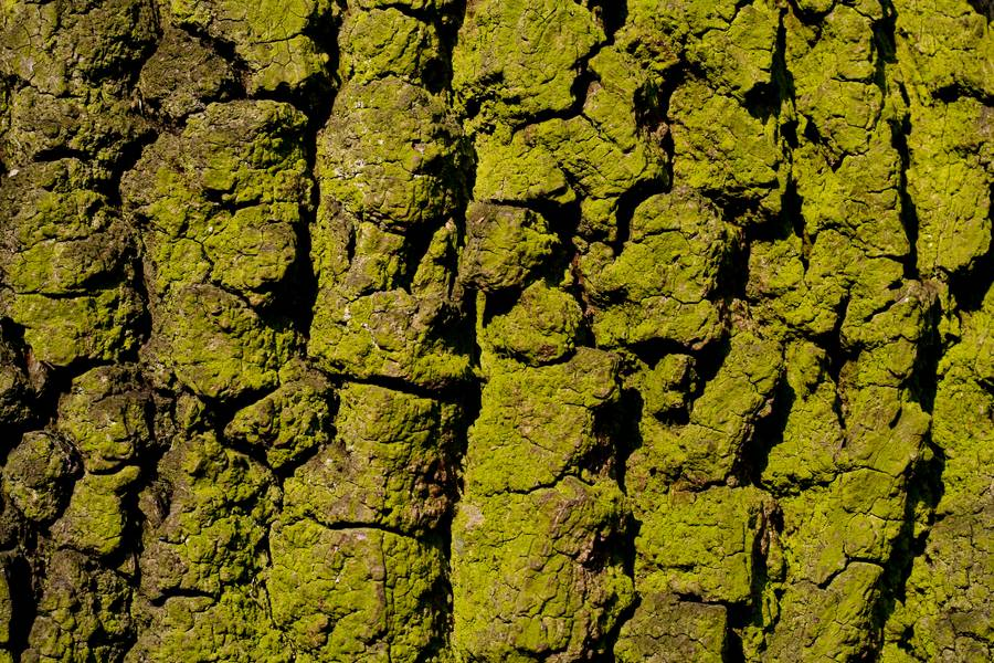 closeup green bark free texture