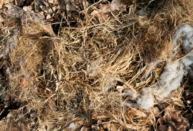 free autumn straw dry texture