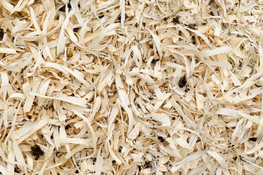 Scobs Sawdust free texture
