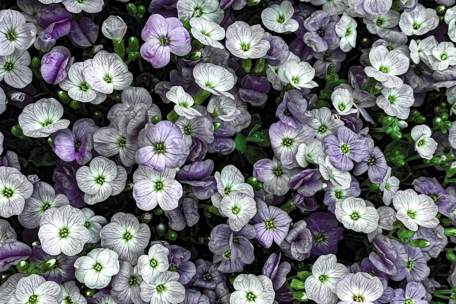 Violet Spring Flowers free texture
