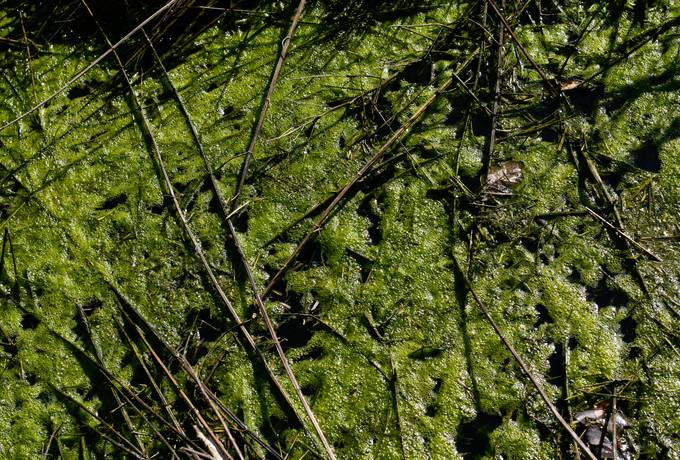 free algae water swamp texture