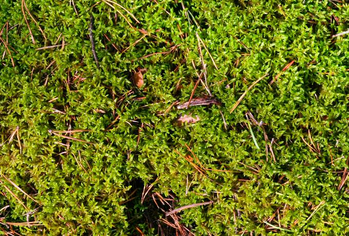 free moss ground plant texture
