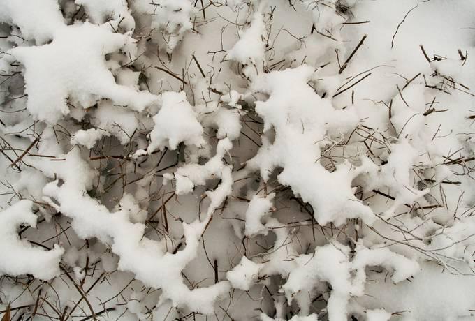 snow nature plant
