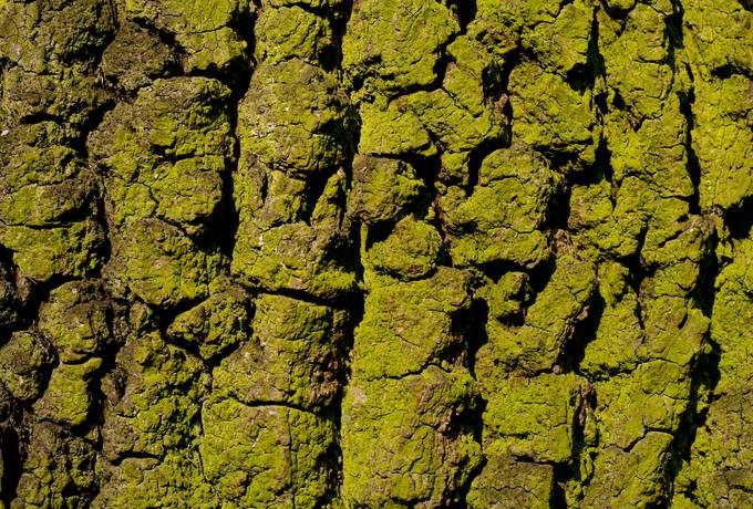 closeup green bark