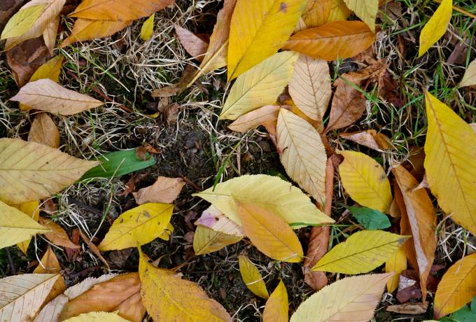 free autumn leaves ground texture
