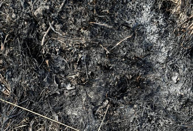 ash burnt ground