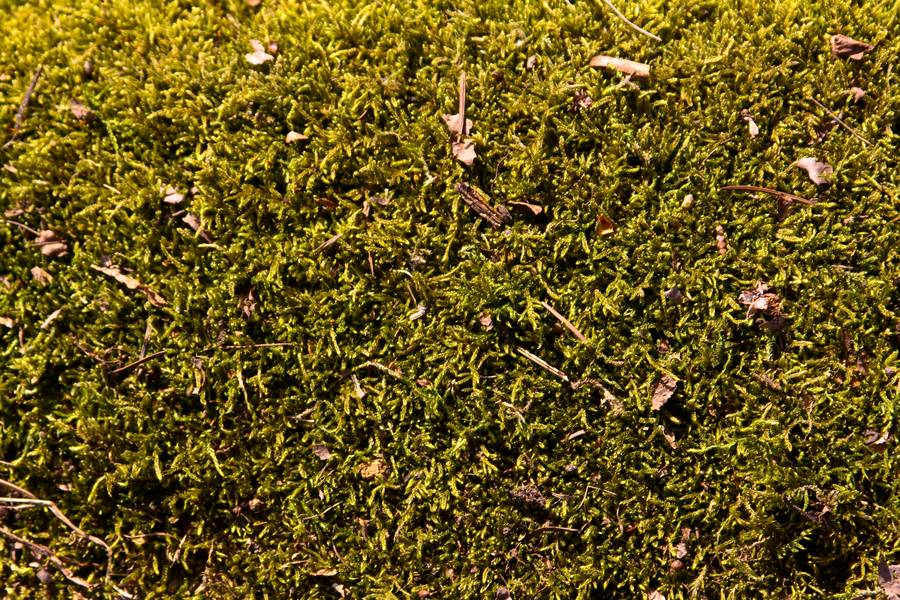 moss plant nature free texture