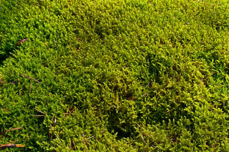 closeup moss nature free texture
