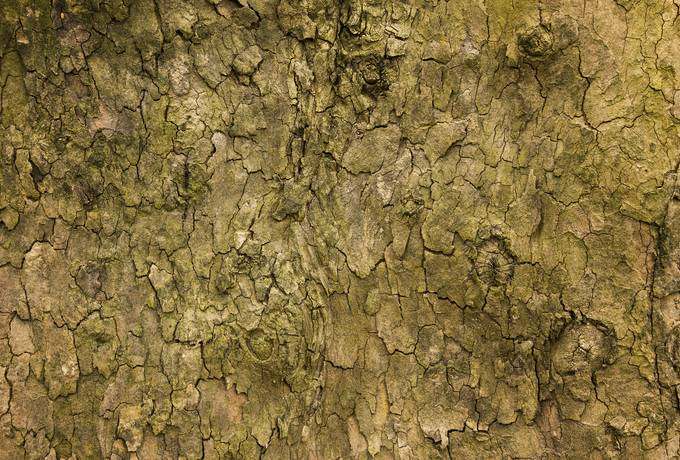 free Old Wood Tree Bark texture