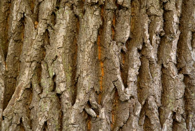 bark nature wood