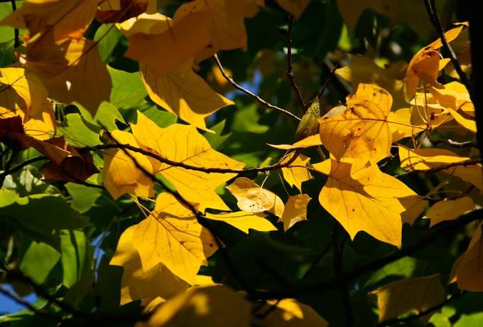 free nature autumn leaves texture