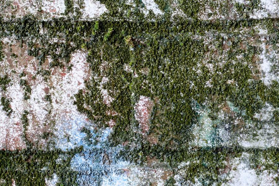 algae brick wall free texture