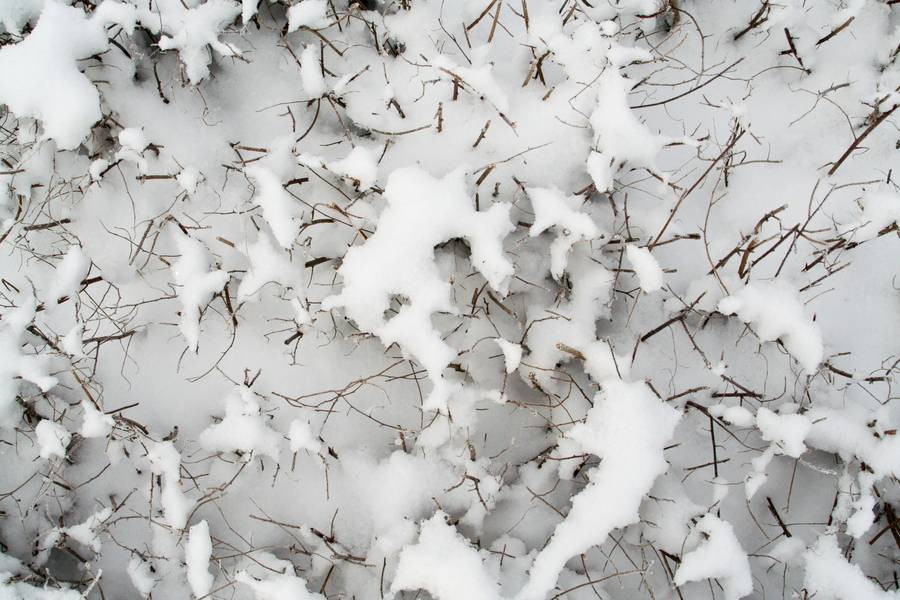snow winter bush free texture