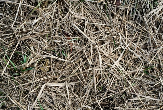 free hay dry grass texture