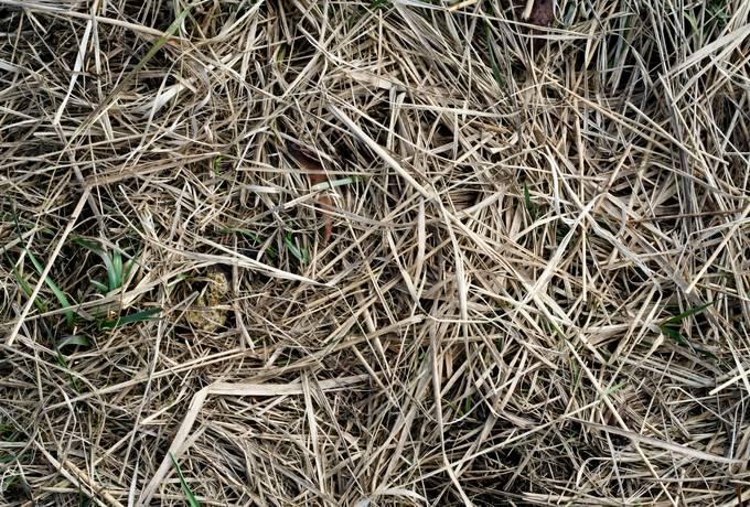 hay dry grass