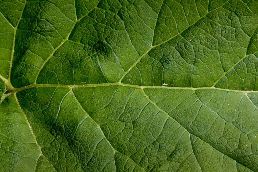 close-up nature leaf free texture