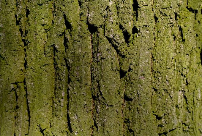 nature wood bark